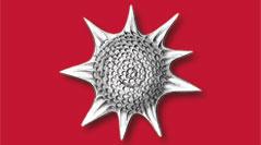 geodiversitas-2021-43-2-radiolaires