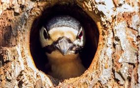 Concepts et limites pour conserver la biodiversité