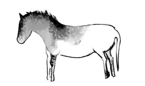 Les équidés représentés dans l'art rupestre et les chevaux actuels: une proposition pour déterminer différences et similitudes morphologiques