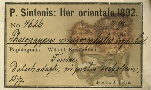 Lectotypification de deux taxons endémiques turcs de <i>Centaurea</i> L. (Asteraceae, Cardueae, Centaureinae)