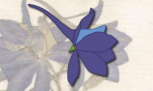 Note historique sur la taxonomie du genre <i>Delphinium</i> L. (Ranunculaceae) et amendement de la description de la morphologie florale