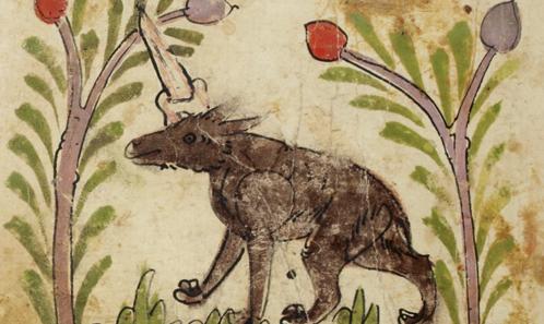 Trouble dans le genre: le rhinocéros est un oiseau! Les débuts islamiques de l'anthropozoologie