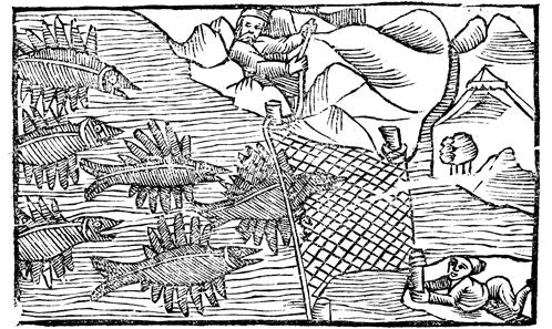 Poisson et pêche dans la littérature irlandaise et galloise: le bétail de la mer