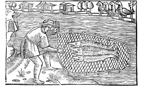 L'exploitation des animaux marins de la côte picarde du XII<sup>e</sup> au XVI<sup>e</sup> siècle