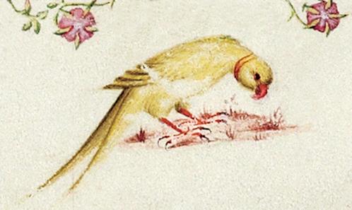 <i>Que le papegau n'est pas toujours vert</i>. Une perruche à collier <i>lutino</i> à la cour du duc de Berry au début du XV<sup>e</sup> siècle