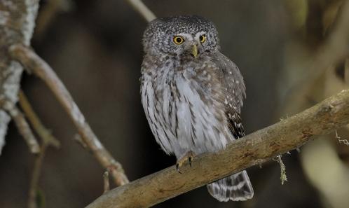 Un cadre détaillé pour comprendre l'histoire évolutive des oiseaux forestiers de l'hémisphère nord