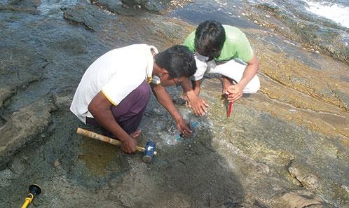 Restes de tortue du Crétacé inférieur de l'île de Kut, Golfe de Thaïlande