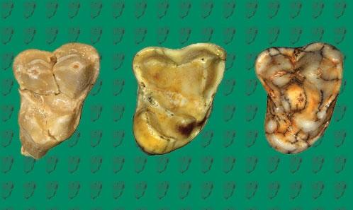 Une nouvelle espèce de chien du site du Pléistocène inférieur de Venta Micena (Orce, bassin de Baza, Espagne)