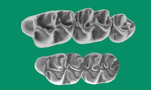 Dispersion et évolution précoce des premiers rongeurs cricétidés modernes en Europe occidentale : nouvelles données du bassin de Vallès-Penedès (Catalogne)