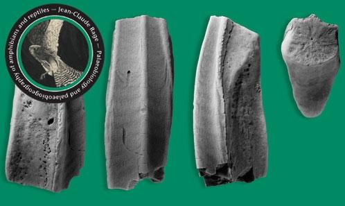 Stratigraphie, âge et paléontologie des vertébrés du gisement finicrétacé de Quintanilla la Ojada (Région Basco-cantabrique, Nord de l'Espagne): une synthèse