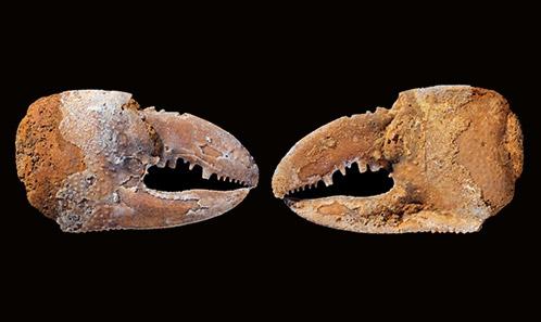 Nouvelles callianasses (Decapoda, Axiidea, Callianassidae) du Cénozoïque inférieur du Pakistan et leurs implications paléobiogéographiques