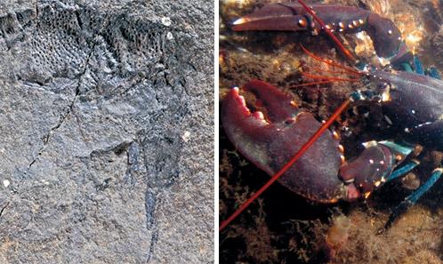 Révision des Érymides (Crustacea : Decapoda) du Crétacé inférieur de la Téthys occidentale