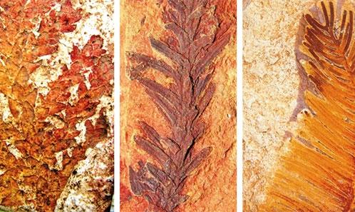 Analyse floristique et implications paléoécologiques des séquences du Crétacé inférieur du bassin de Krishna-Godavari, Côte Est de l'Inde