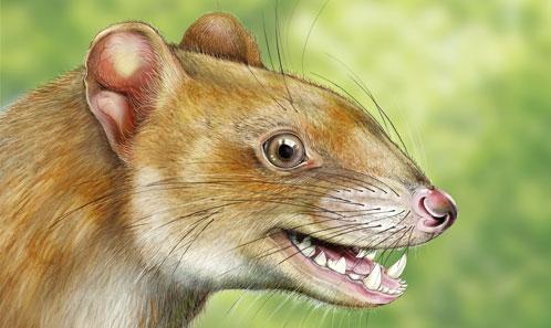 <i>Allqokirus australis</i> (Sparassodonta, Metatheria) du Paléocène inférieur de Tiupampa (Bolivie) et l'essor de la radiation de métathériens carnivores en Amérique du Sud