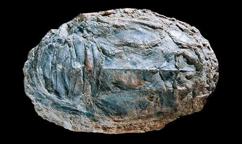 Les grands Polychelida à carapace arrondie du Jurassique moyen du Lagerstätte de La Voulte-sur-Rhône: clarifications taxonomiques