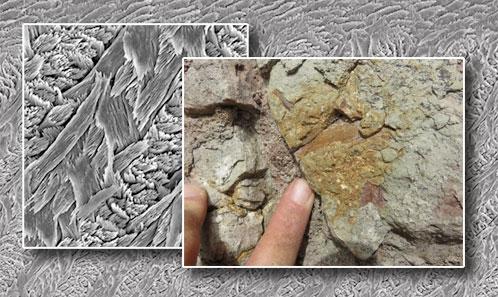 Restes inédits de rongeurs caviomorphes du Paléogène de la région de Juanjui (Amazonie péruvienne): systématique, implications macro-évolutives  et biostratigraphiques