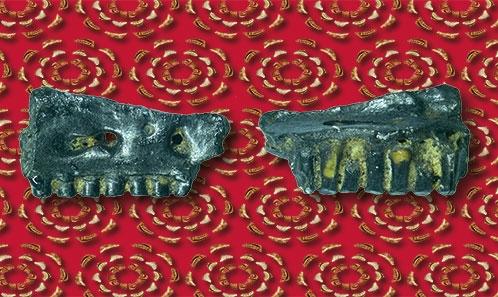 Les lézards fossiles de l'Oligocène et du Miocène de Mongolie Centrale