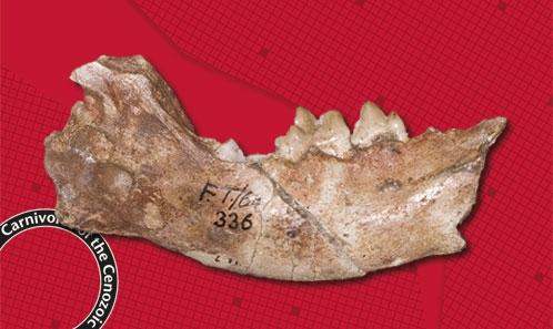 Les Carnivora et les Hyaenodonta du Miocène moyen de Fort Ternan, Kenya occidental