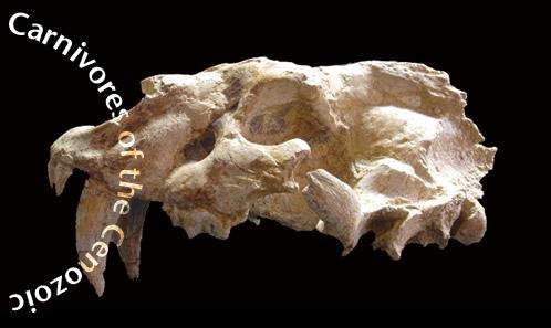Le félin à dents de sabre <i>Homotherium latidens</i> (Owen, 1846) de la localité pléistocène inférieure de Dafnero, Macédoine occidentale, Grèce