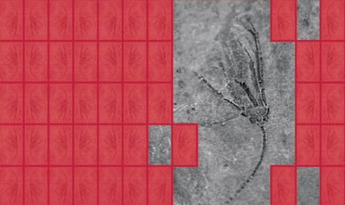 Crinoïdes eucladides juvéniles du Dévonien moyen de Turquie