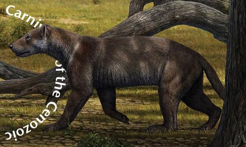 Nouveaux fossiles d'Amphicyonidae (Carnivora) du Miocène moyen (MN6) de Carpetana (Madrid, Espagne)