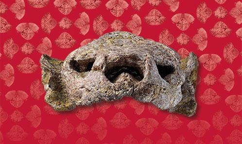 Le plus ancien crâne de tortue érymnochélyinée, <i>Ragechelus sahelica</i> n.gen., n.sp., du bassin des Iullemmeden, Crétacé supérieur d'Afrique, et la faune associée dans son contexte géologique et géographique