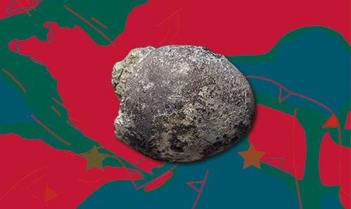 Première mention de décapodes dans l'Éocène inférieur du Maroc: description d'un nouveau genre et d'une nouvelle espèce de Carpiliidae (Decapoda: Brachyura) avec des remarques sur sa paléobiogéographie