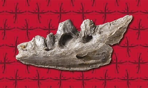 Les lézards fossiles du Paléocène de Montchenot (Bassin de Paris, MP6)