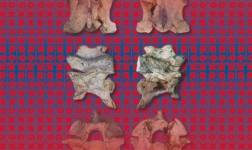 <i>Naja romani</i> (Hoffstetter, 1939) (Serpentes: Elapidae) du Miocène supérieur du Caucase du Nord: ledernier grand cobra d'Europe de l'Est