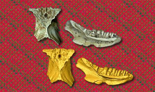 Atlas ostéologique de nouveaux lézards des Phosphorites du Quercy (France), basé sur des matériaux fossiles historiques et oubliés