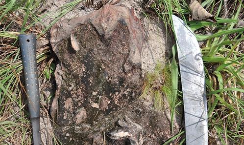 Découverte d'empreintes de dinosaures dans la Formation Stanley Pool, au Gabon