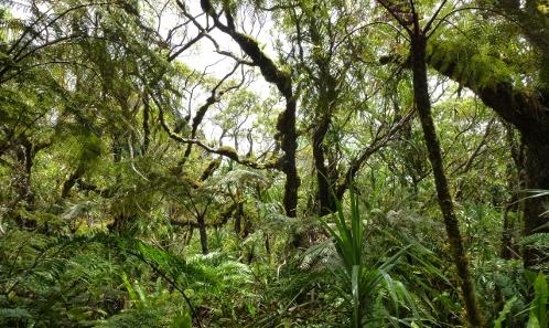 Quelle stratégie de recherche pour une meilleure conservation de la biodiversité terrestre dans les îles tropicales ultramarines françaises ?