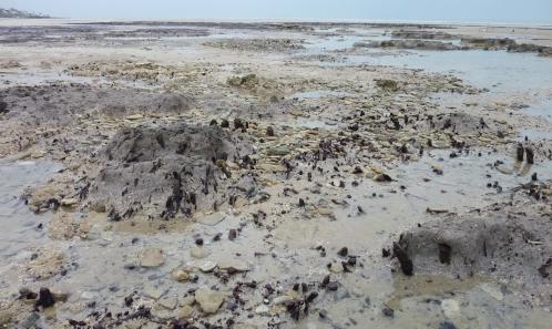 Nouvelle étude paléoenvironnementale de la «Forêt de Quintefeuille» d'après les cortèges malacologiques holocènes: du passé à l'actuel (Graye-sur-mer, Calvados, Normandie)
