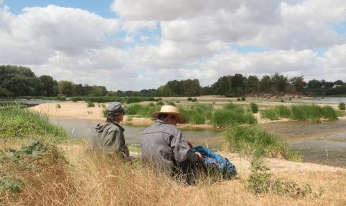 Comparaison de la biodiversité floristique  entre berge et île de Loire. Étude de cas  dans la réserve naturelle nationale de Saint-Mesmin (45)