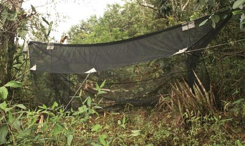 Les mouches mineuses (Diptera: Agromyzidae) de l'expédition du Mitaraka, Guyane
