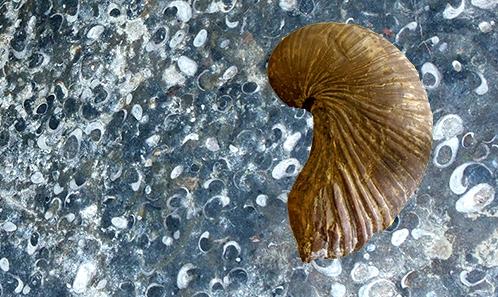 Stratotype Sinémurien