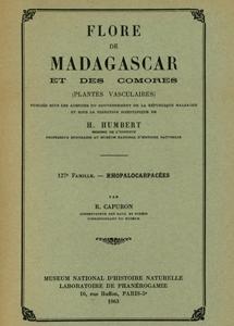 Rhopalocarpaceae