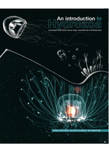 An introduction to Hydrozoa