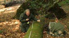 Évaluation statistique d'un protocole de relevés bryologiques pour inventorier et suivre la biodiversité en forêt