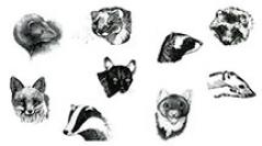 Encyclopédie des carnivores de France