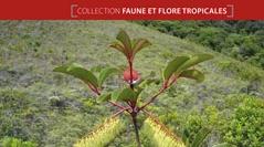 Faune et Flore tropicales