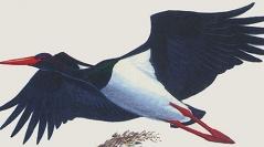 Bibliographie d'ornithologie française