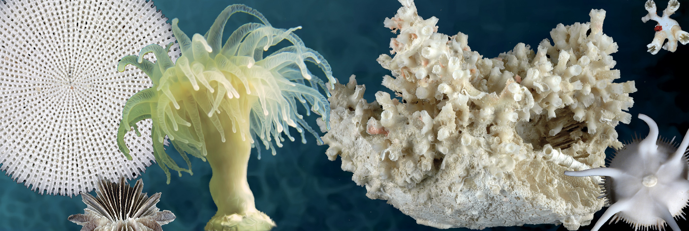<div>Tropical Deep-Sea Benthos volume 32</div>