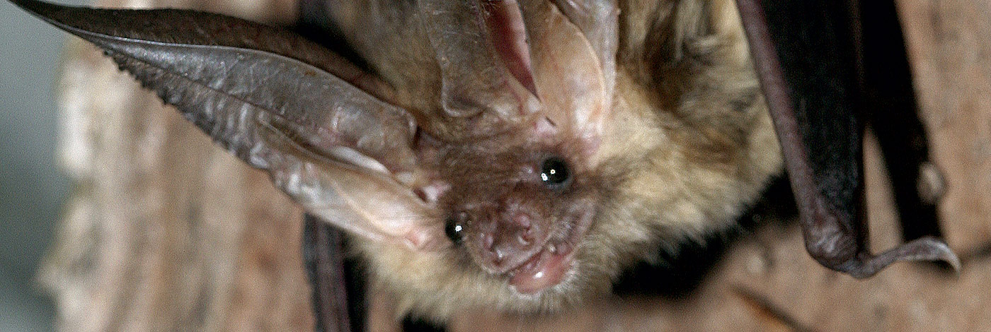 <div>Acoustic Ecology of European Bats</div>