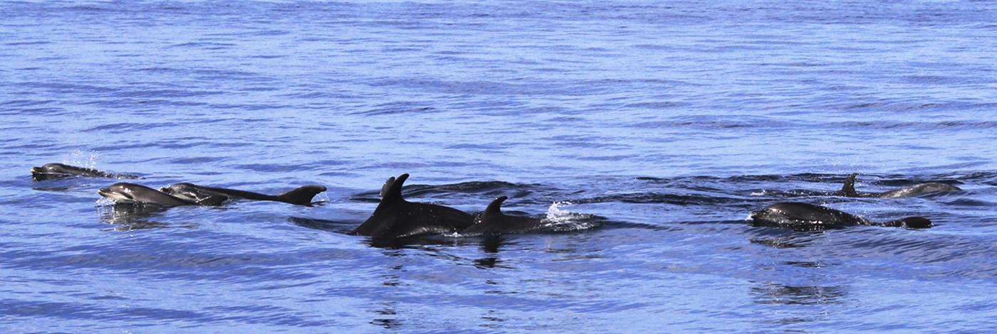 aquatica 1 le cantique des baleines